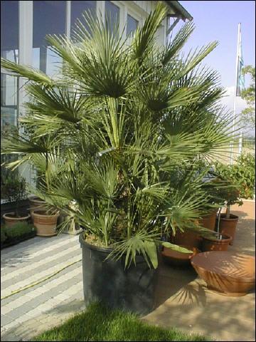 palme2_360.jpg